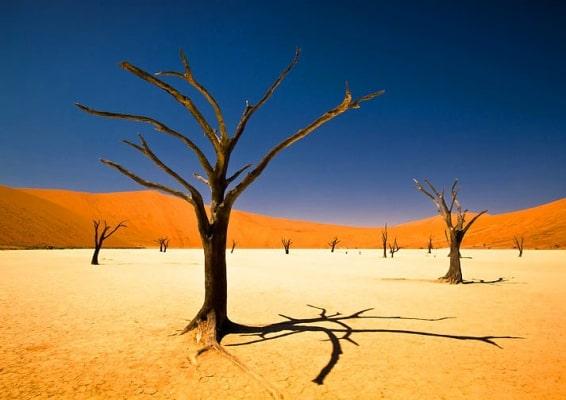 Dead Vlei -Namibia