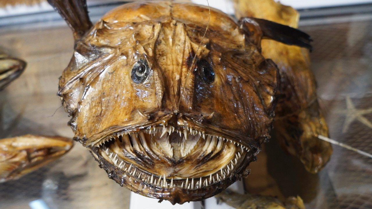 Turkish Sea Creatures Museum