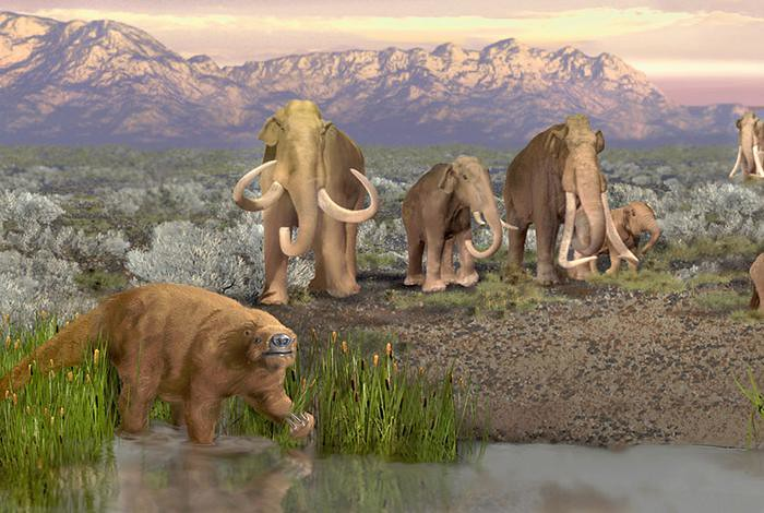 Artist's depiction of the late Pleistocene landscape with some of the megaherbivores that became extinct. Artist's depiction of the late Pleistocene landscape with some of the megaherbivores that became extinct.