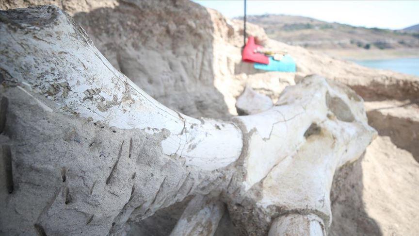 yamula dam found fossil
