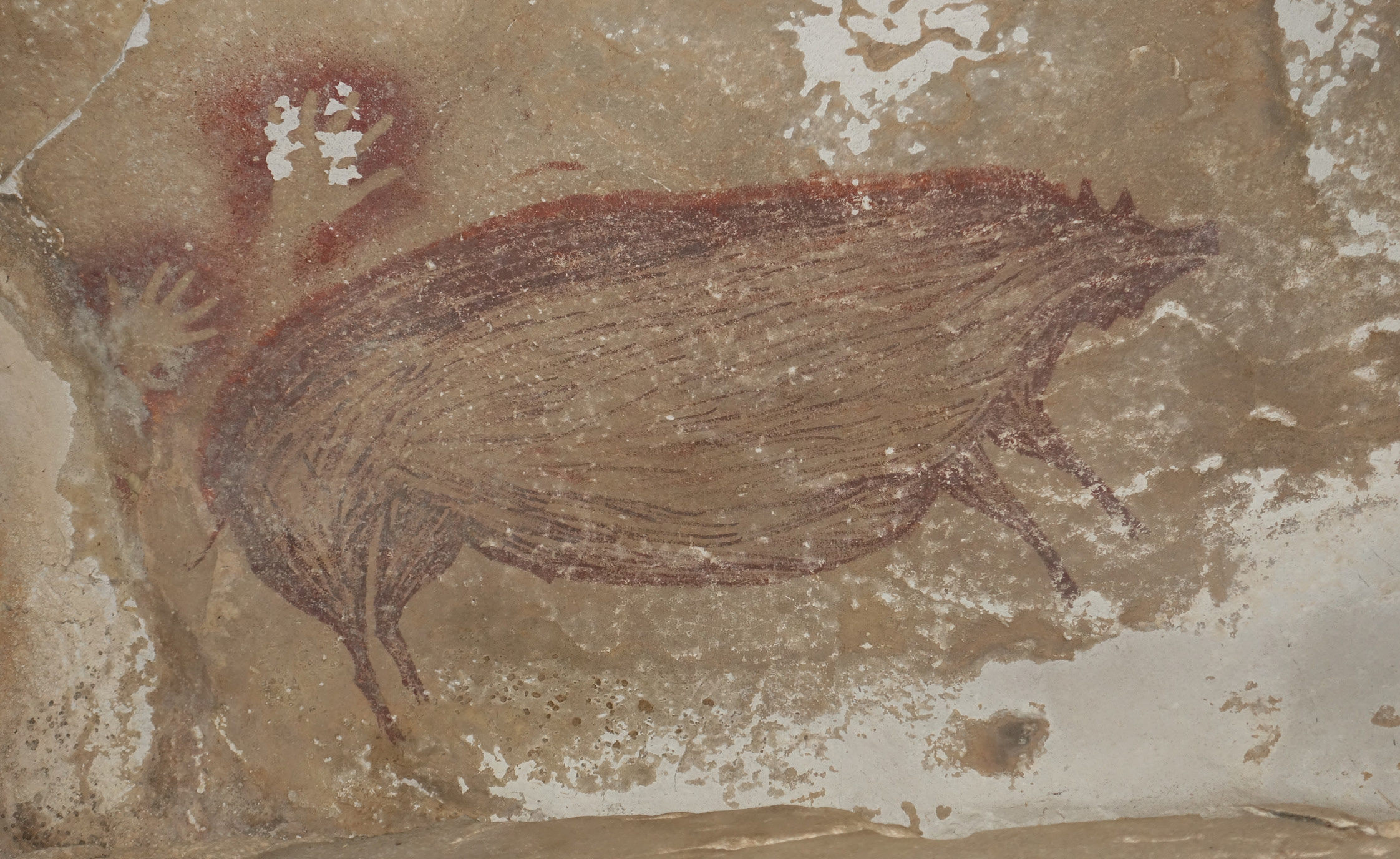 The paintings in Leang Tedongnge cave depict the Sulawesi warty pig, a species commonly featured in Indonesian rock art.