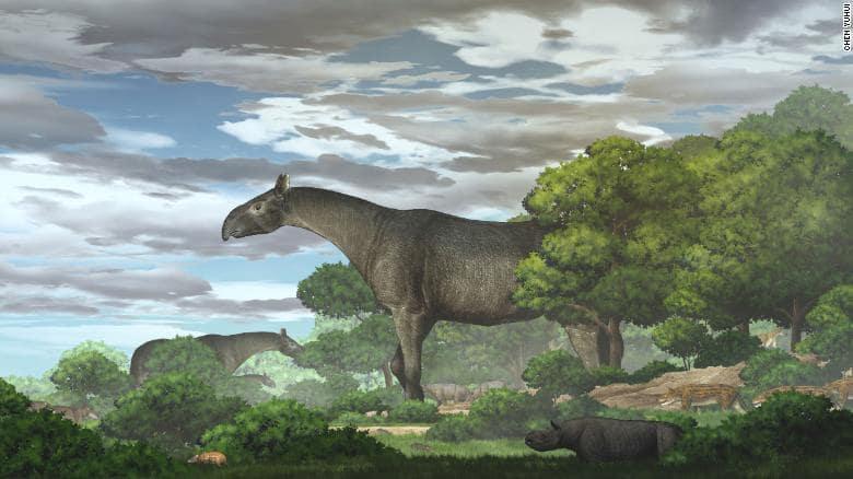 The Linxia Giant Rhino