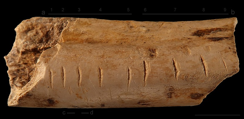 Marks made on a hyena bone by a Neanderthal indicate that he may have recorded his numerical information. Photo: F. d'Errico
