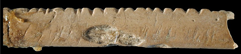 Researchers think that people cut notches into this baboon bone some 40,000 years ago as an early form of counting.Photo: F. d'Errico & L. Backwell
