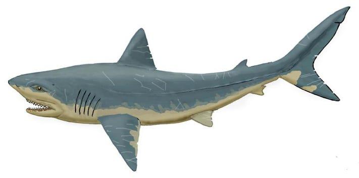 Artist's impression of a Squalicorax shark. DIMITRI BOGDANOV