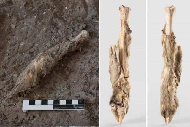 The mummified sheep leg