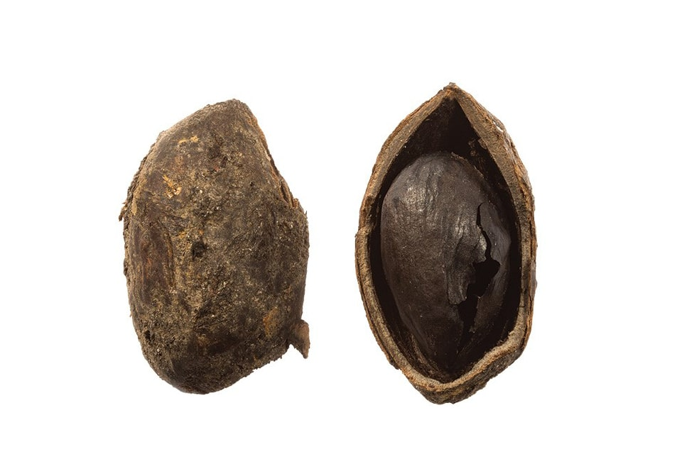 The excavation of a late 1st-century well at Fort Bridge yielded a wealth of well-preserved organic finds, including the earliest pistachio nut known in Britain.