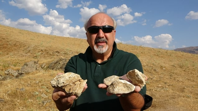 Iskender Dölek, a geomorphologist, and lecturer at Muş Alparslan University's Disaster Management Application and Research Center, told journalists that he would send the invertebrate marine fossils to paleontologists to determine their age, species, and genus.