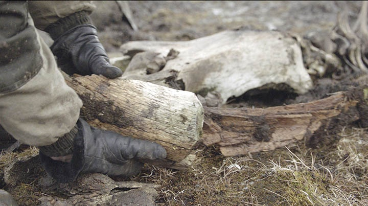 People used a wide range of tools for cutting. There is not a single bone that would be without traces of human impact'. Photo: Innokenty Pavlov/The Siberian Times