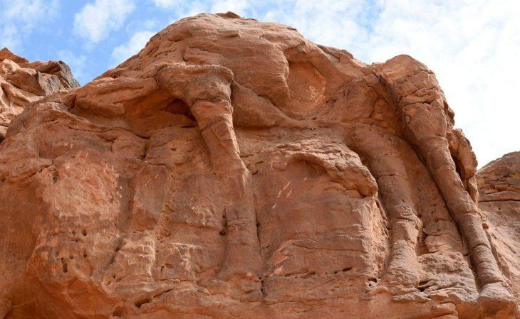 camel carvings