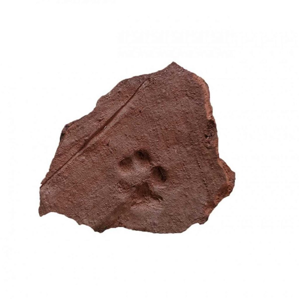 The paw print which was found may have been made by one of the Roman's pets walking across the tile whilst it was being made.
